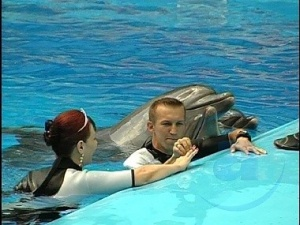 Українці одружились у басейні з дельфінами
