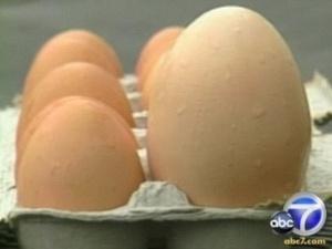 Курка знесла гігантське яйце