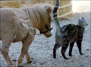 У США живе кінь-карлик розміром з кота