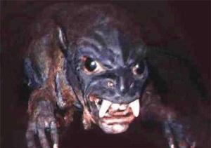 Хижак-вампір поселився на Волині!