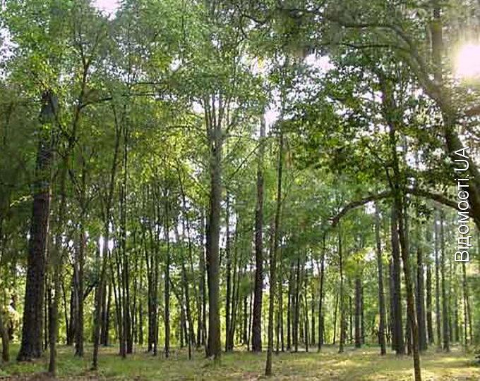 Волинських лісів стало більше на 50 гектарів