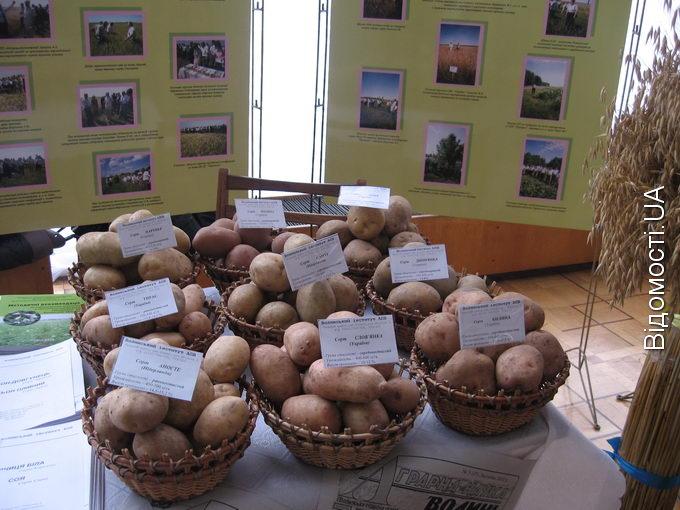 Для сільгоспвиробників виділять 40% торгових площ