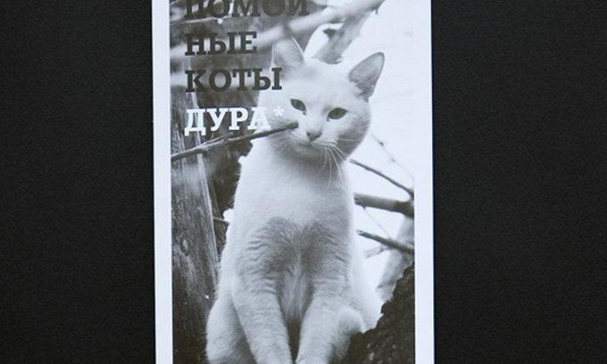 Бездомні коти позували для «антигламурного календаря». ФОТО