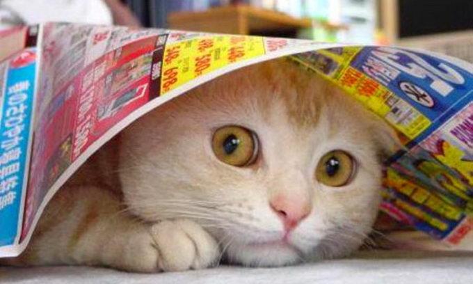У Пітері новоселам здають котів напрокат