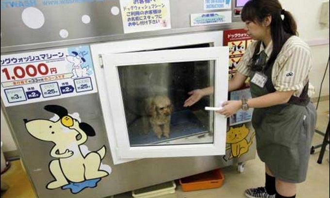 Японці, щоб полегшити собі життя, купають домашніх тварин у пральній машині