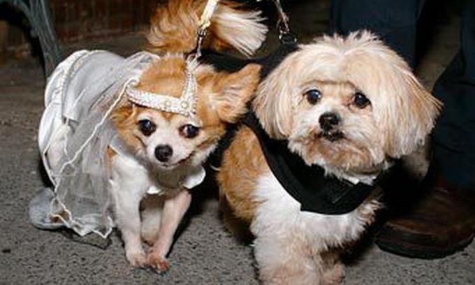 Працівники притулку одружили нерозлучних собак