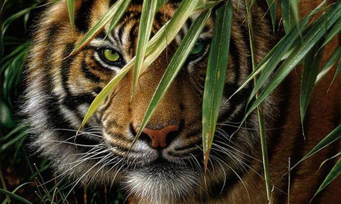 Індуси врятували тигра, якого знайшли в занедбаному колодязі