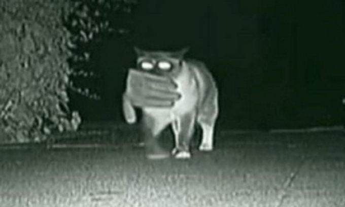 Камера зафіксувала нічні вилазки кота-клептомана. ВІДЕО