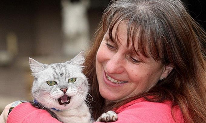 Британський кіт муркоче голосніше за «Боїнг»