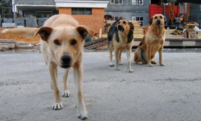 До Дня незалежності обіцяють збудувати притулок для луцьких бродячих собак