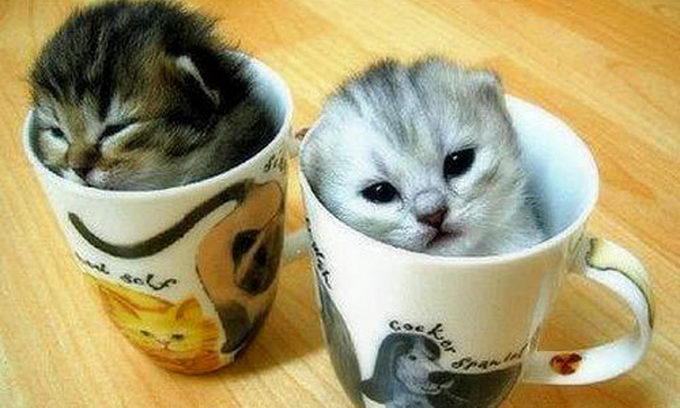 Муркотуни всього світу, єднайтеся! Сьогодні День котів