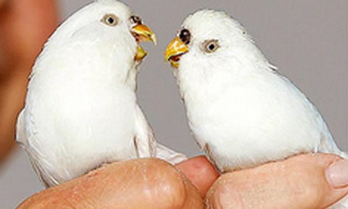 Новозеландець врятував папуг, яких завалило під час землетрусу