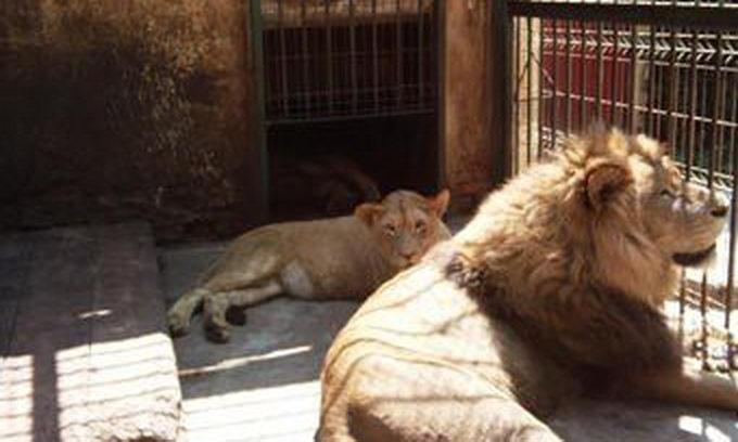 Тваринам румунського зоопарку заборонили паруватися
