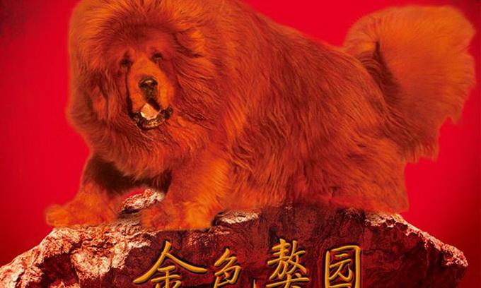 Китайський бізнесмен придбав собаку Будди за 1,6 мільйона доларів