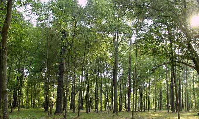 За лісами в Україні вестимуть супутникове спостереження