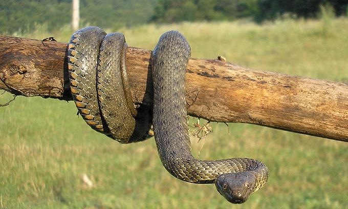 З будинку лучанки рятувальники винесли чотири змії