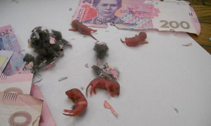 В Луцьку миша поселилася в банкоматі