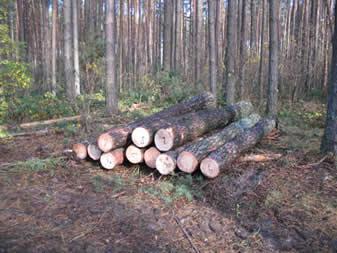 Експортерів лісу на Волині поменшало вдвічі
