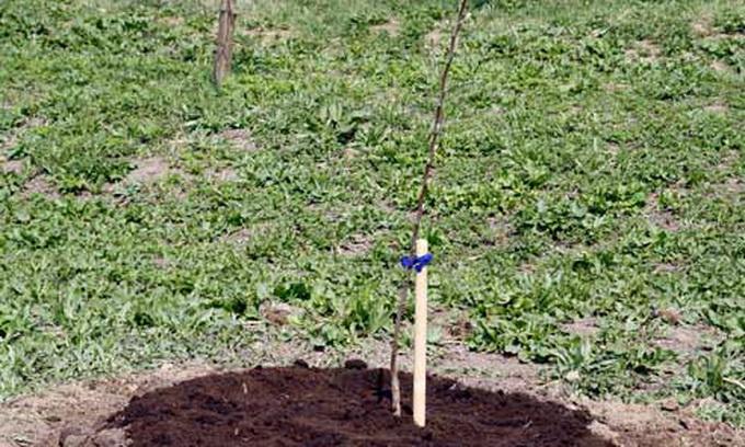 На Волині 100 га землі віддали інвестору під яблуневий сад