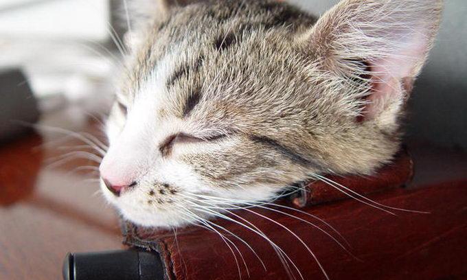 Кіт приніс в'язню литовської тюрми мобільник у пакеті з макаронами