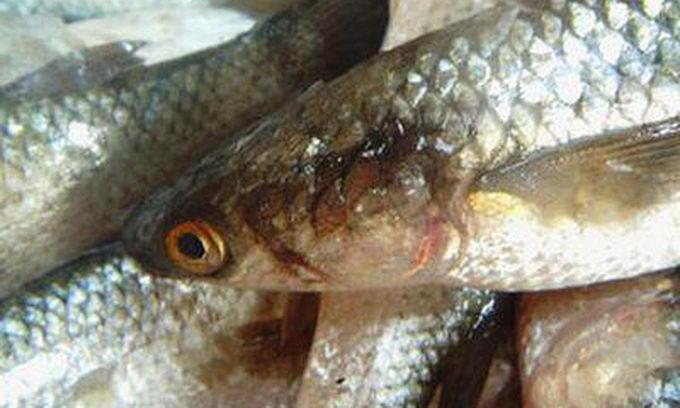 Держекоінспекція оштрафувала 21 порушника за незаконний вилов риби
