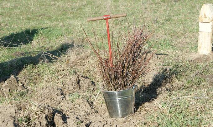 На Волині заготовили 424 кг елітного насіння дерев