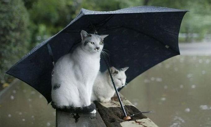 Аби захистити Волинь від паводків, уряд дав більше 22 мільйонів