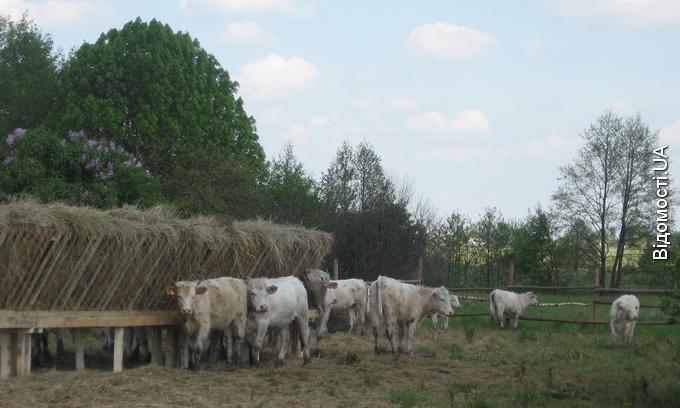 Вчасне підживлення та хороша погода – запорука успіху аграріїв