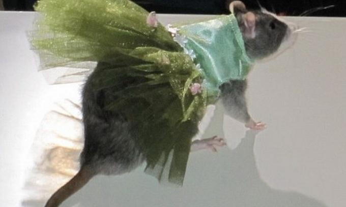 У Нью-Йорку модно вдягнули щурів