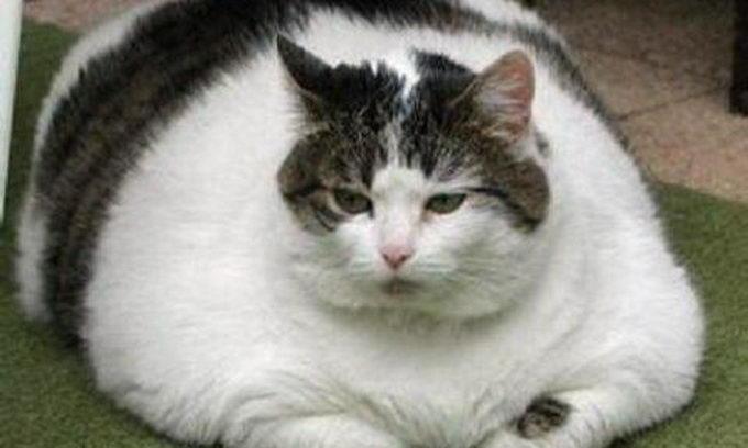 Притулок для тварин почав розпродаж товстих котів