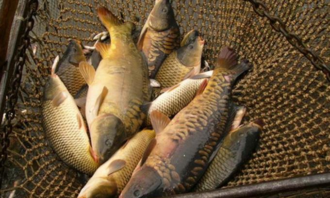 Для орендарів водойм визначили місця для торгівлі свіжою рибою
