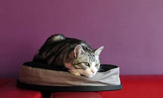 У Росії відкрилася «Республіка кішок»