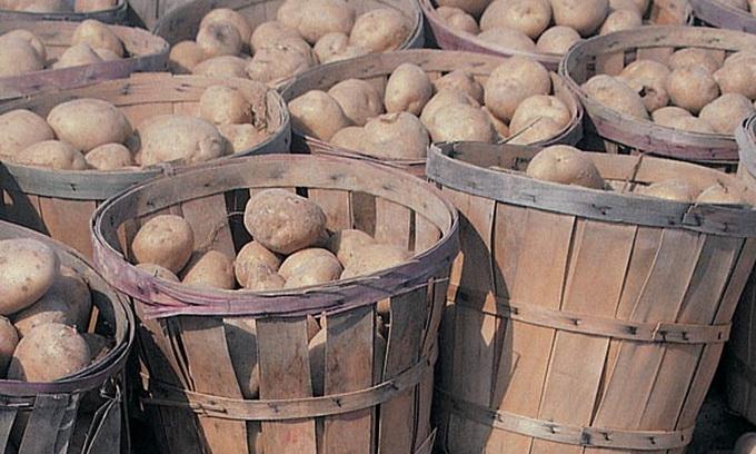 Минулого року волиняни експортували картоплі на 300 мільйонів