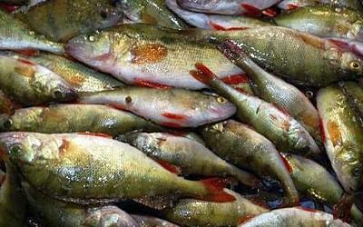 На Ратнівщині у браконьєрів вилучили 500 метрів рибальської сітки