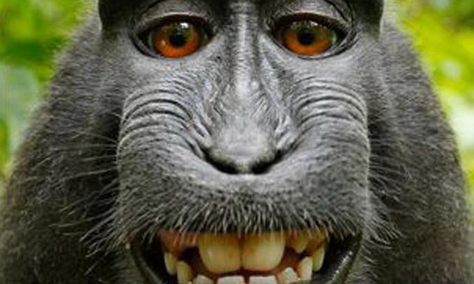 Макака влаштувала фотосесію у джунглях Індонезії