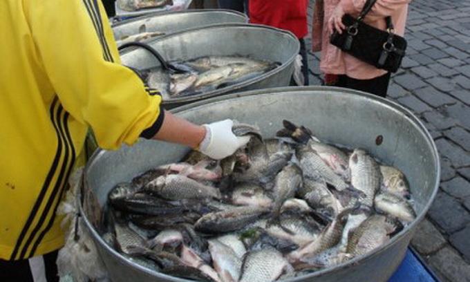 Орендарі водойм отримали місця для продажу свіжої риби