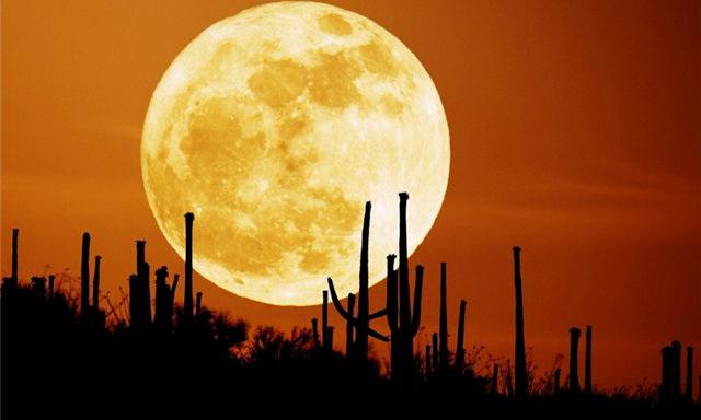 Американці відкриють піцерію на Місяці