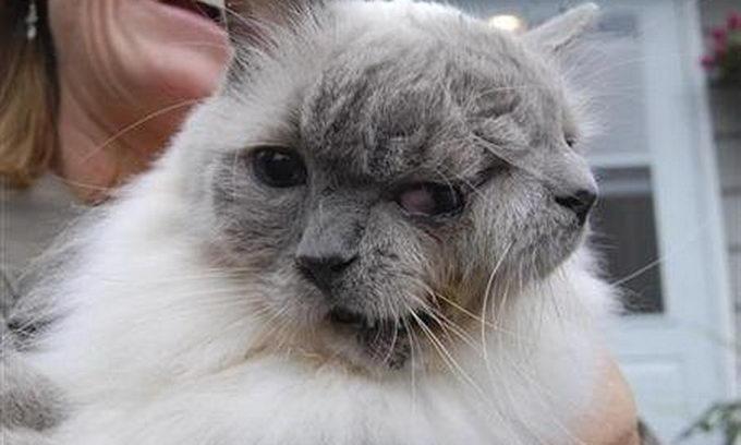 Котові з двома мордами виповнилося 12 років