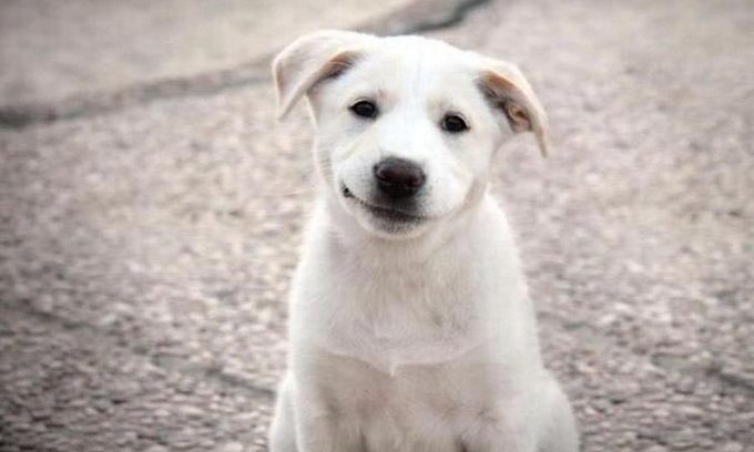 Частіше українці в Інтернеті шукають собак, ніж котів