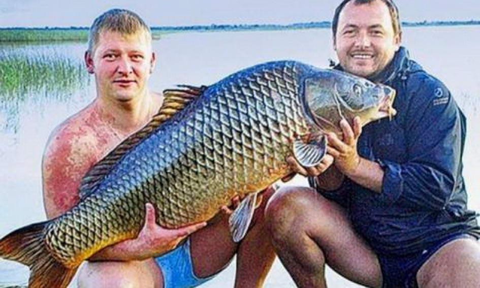 На Волині двоє рибалок піймали 30-кілограмового коропа