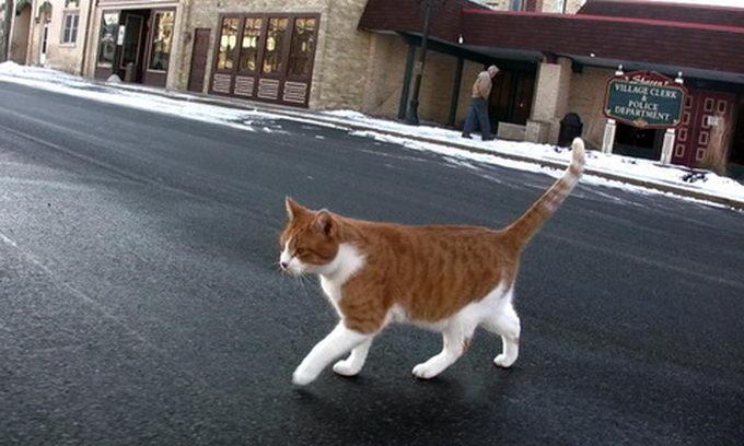 Мешканці американського містечка обрали мером кота