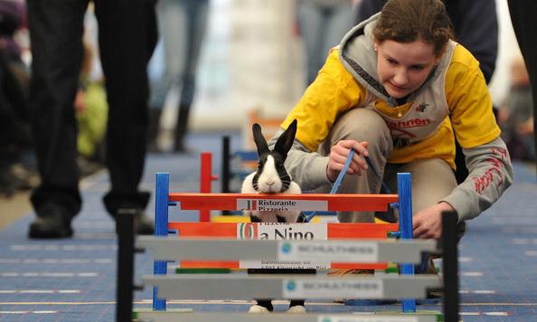 У Швейцарії влаштували кролячі перегони