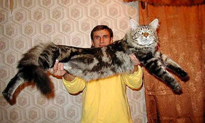 Кіт упав на господаря і забезпечив йому струс мозку