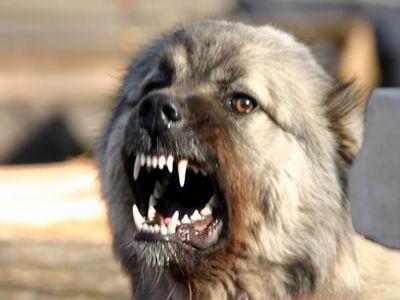 Суд звинуватив жінку в тому, що вона втрутилася у «сварку» собак