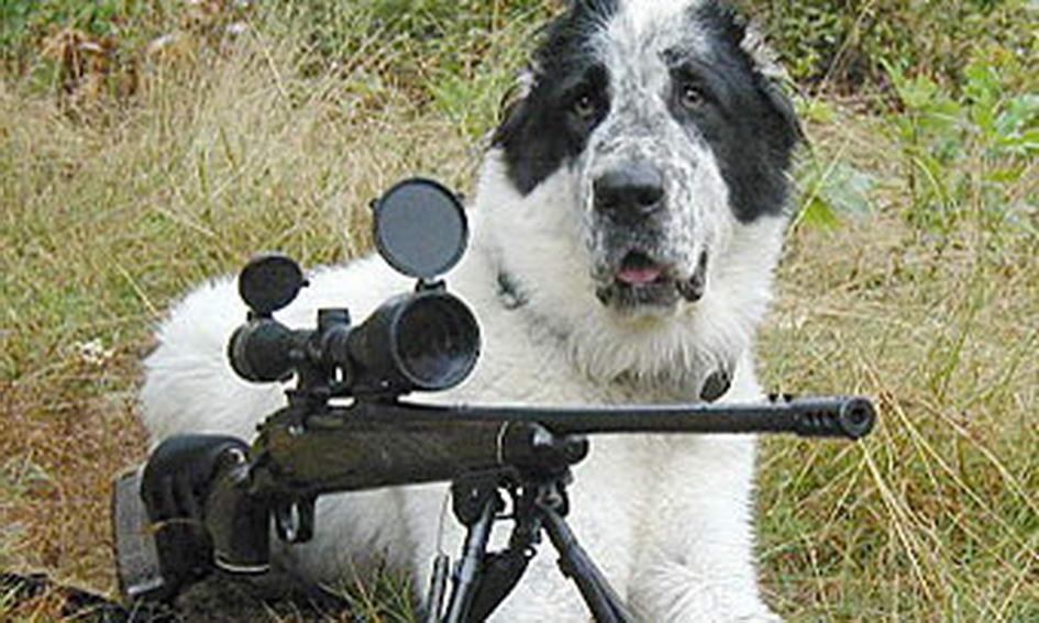 Собака випадково підстрелив хазяїна на полюванні