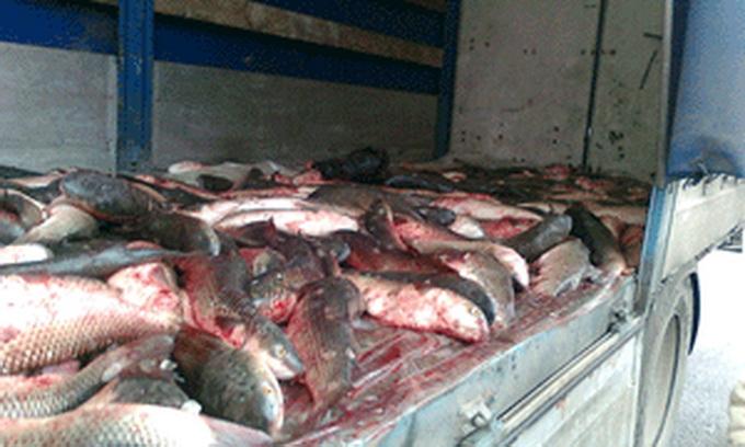 У Ківерцях вилучили півтонни риби невідомого походження