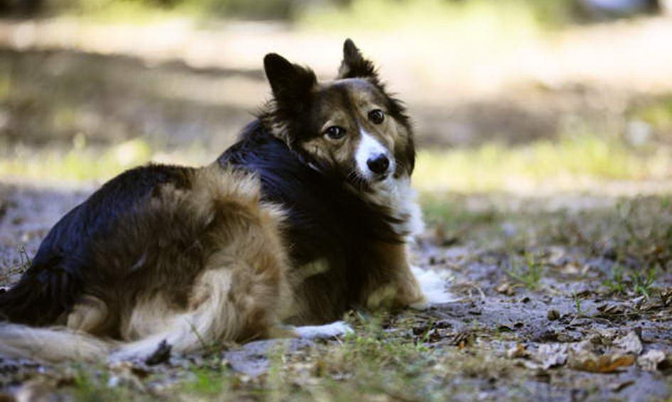 У Голлівуді заснували кінопремію для собак