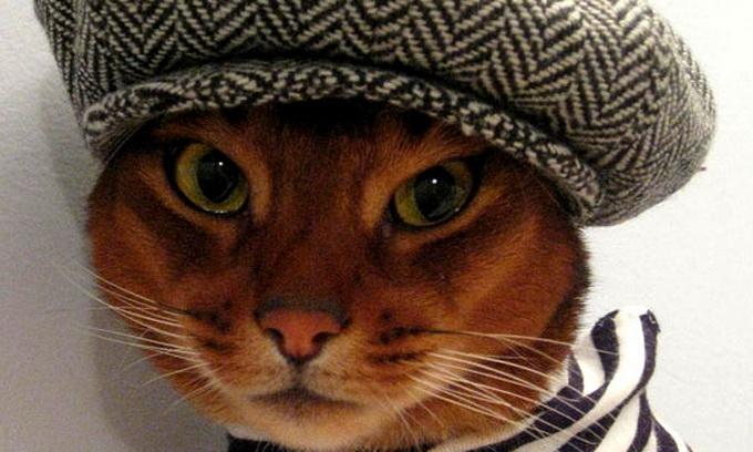 Дизайнерка з Нью-Йорка створює гламурне вбрання для котів
