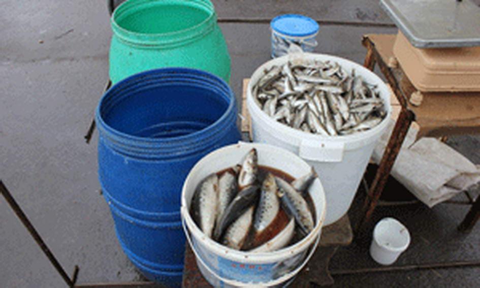 На Варшавському ринку вилучити більше 100 кг невідомої риби
