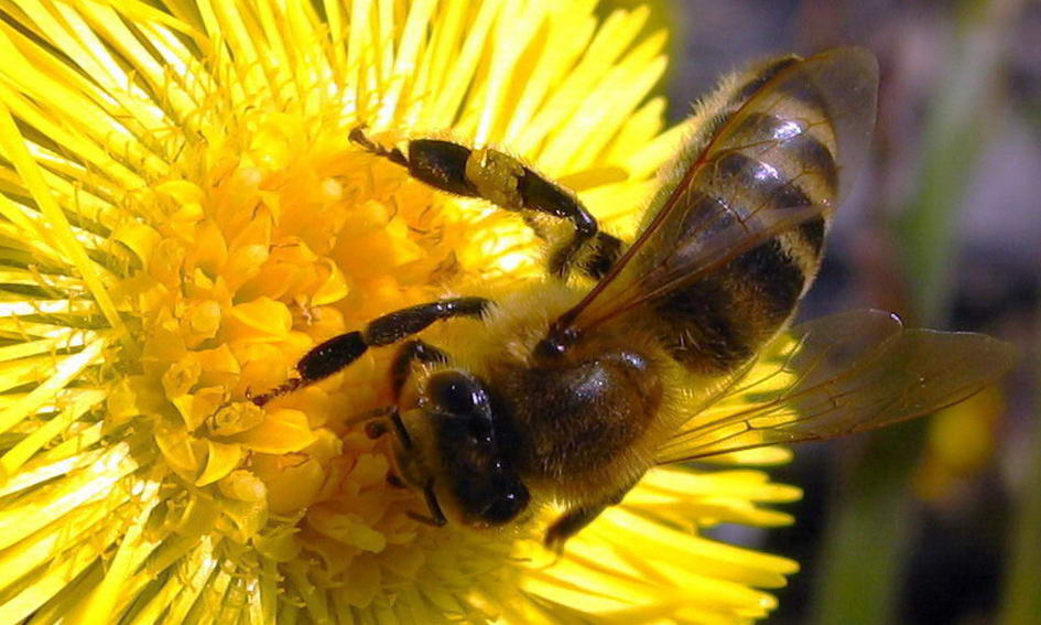 У Баєві Луцького району створюють музей бджільництва